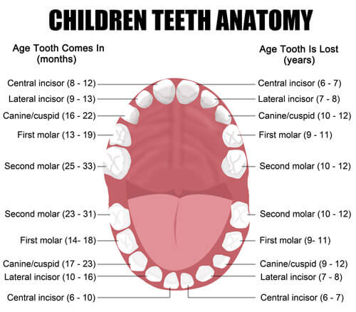 toothchart